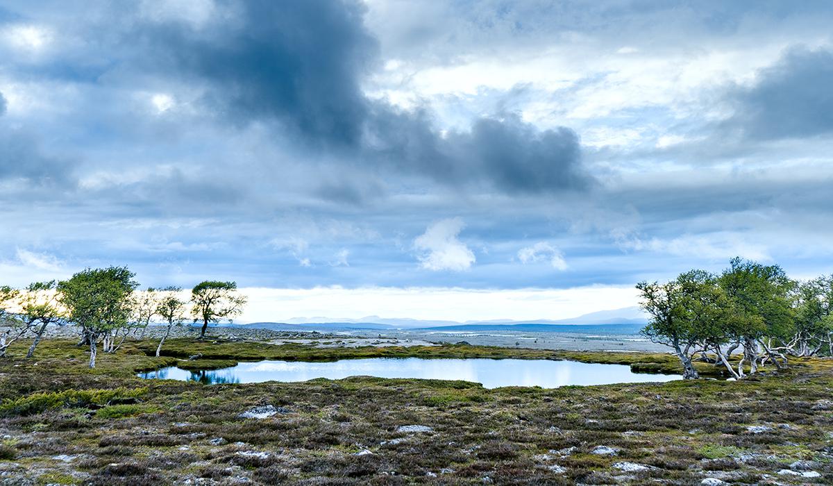 Oase im Femundsmarka Nationalpark