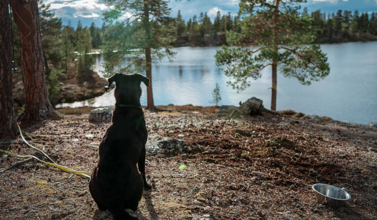 Hund vor seinem Fressnapf in der Natur